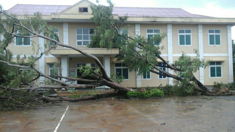 Cây cổ thụ ở thị trấn nông trường Lệ Ninh bị bật gốc do bão số 10.