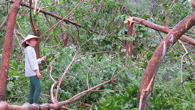Vườn cây cao su của chị Hiền tan hoang sau bão số 10.