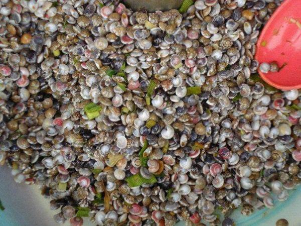 Ốc lể: Ốc lể hay còn gọi là ốc gạo, ốc ruốc hay ốc ngũ sắc là món quà quý mà biển ban tặng cho người dân miền Trung. Ốc lể được bày bán ở nhiều nơi nhưng món ốc lể ở Quảng Bình khá đặc biệt vì nó có hương vị riêng mang đậm chất biển nơi đây. Món ốc này khi ăn phải dùng gai cây chanh, cây bưởi hoặc cây đốm để kết hợp với mùi thơm của ốc. Ảnh: GĐ&XH.