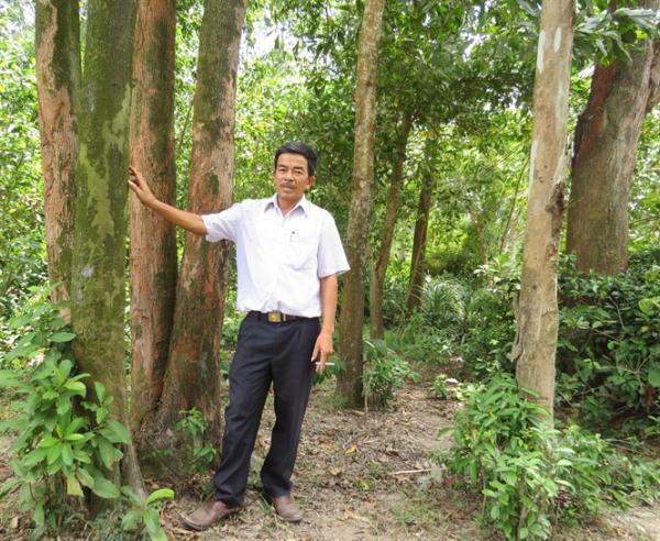Một góc rừng cây gỗ lớn