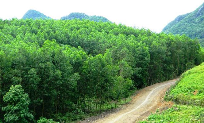 Hầu hết các vụ cháy rừng trong năm 2017 đều xảy ra trên diện tích rừng trồng.