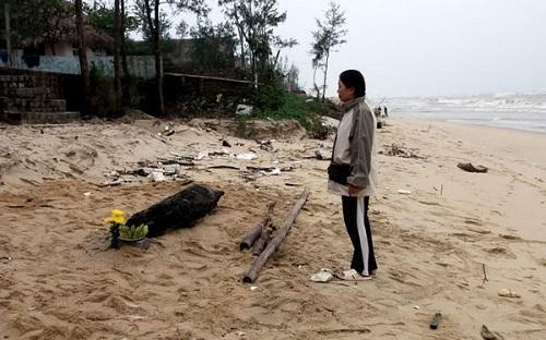 Con cá heo đã chết từ lâu, nặng khoảng 70kg và đang trong quá trình phân hủy