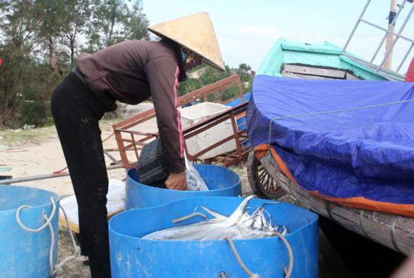 Ngư dân Hải Ninh được mùa cá hố.