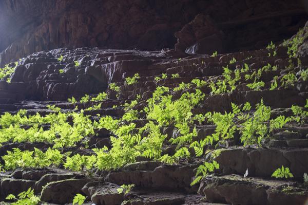 Ánh sáng chiếu vào khá sâu trong hang giúp nhiều cây dương xỉ mọc lên xanh tốt.