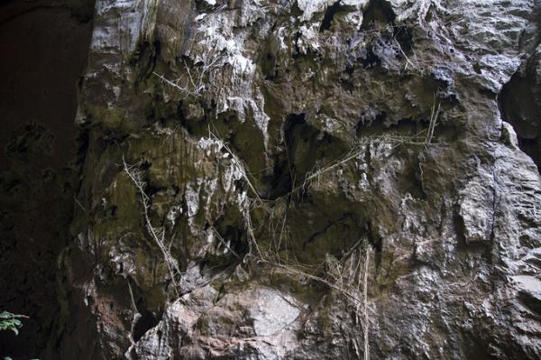 Tại cửa ra của hang, du khách có thể thấy nhiều dây rừng và tre được người địa phương cột lại với nhau để đu lên thành hang khai thác tổ yến, mật ong. Việc này đến nay không còn do quy định bảo vệ rừng. Hang được người địa phương phát hiện vào năm 1997, sau đó được Hiệp hội hang động Hoàng gia Anh thám hiểm.