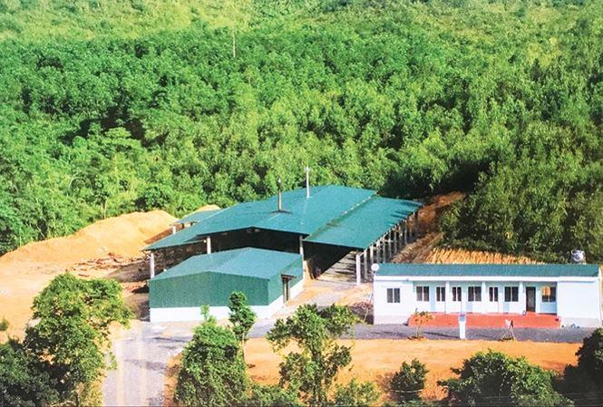 Nhà máy của Huy đặt ở nơi heo hút, để bớt vất vả cho người dân.