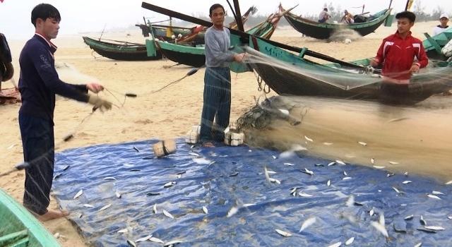 Ngư dân xã Hải Ninh, huyện Quảng Ninh (Quảng Bình) được mùa cá trích.