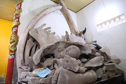 Hai bộ xương cá voi được người dân Cảnh Dương lưu giữ 200 năm nay. Ảnh: Hoàng Táo