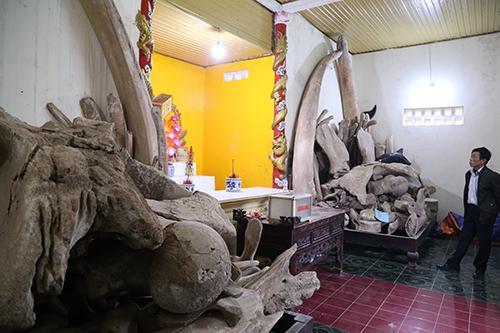 Hai bộ xương dự định được Sở Du lịch Quảng Bình xây nhà trưng bày, sắp xếp lại thành hình hài như con cá voi. Ảnh: Hoàng Táo
