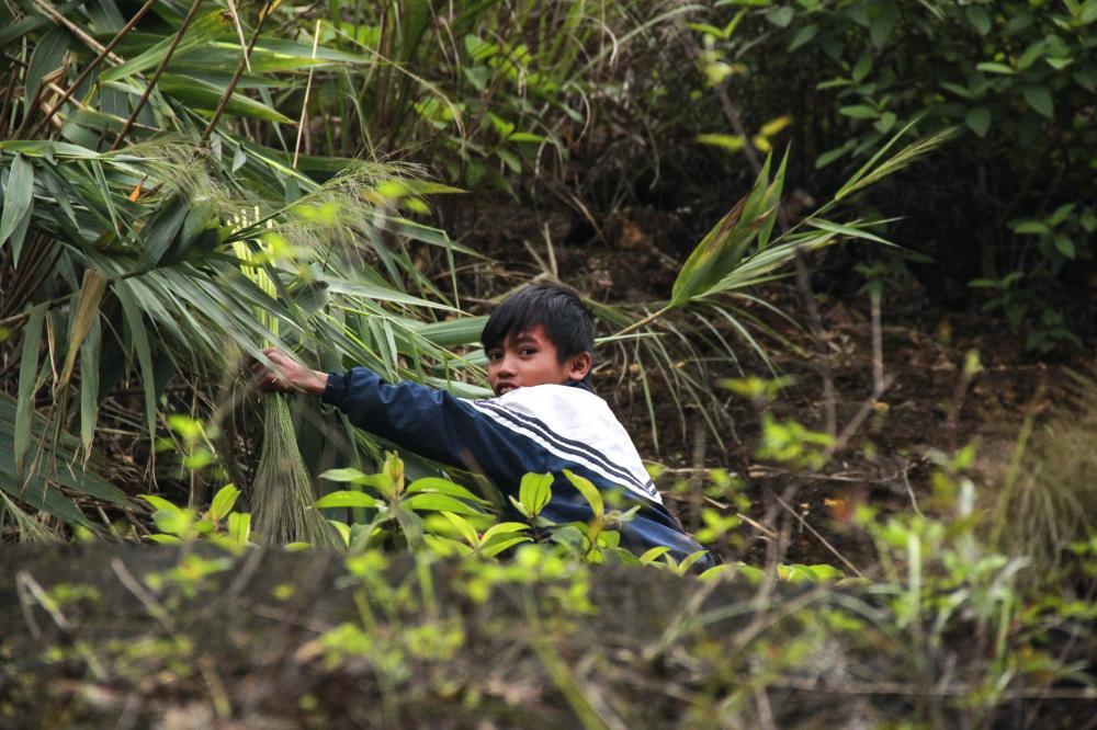 Vào những ngày này, bà con ở nhiều bản của xã Dân Hóa, huyện Minh Hóa, tỉnh Quảng Bình phấn khởi vì lợi ích kinh tế từ cây đót. Đây là một loại cây mọc tự nhiên trong rừng già, nguyên liệu để làm chổi đót
