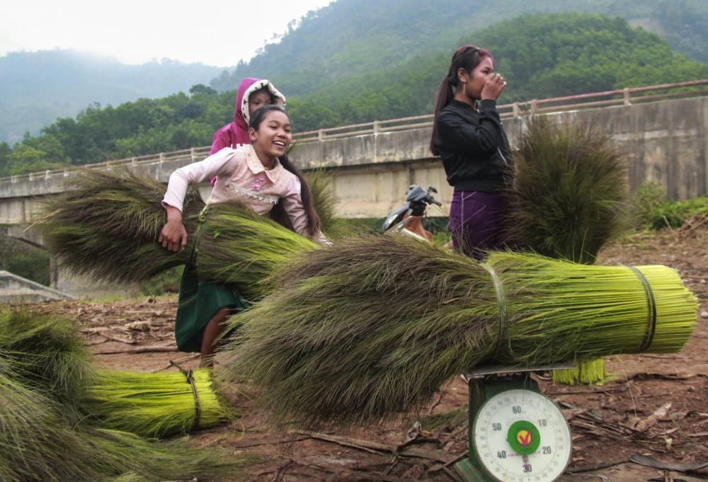 Các thương lái sẽ lên tập kết lộc trời và thu mua cho bà con ở đầu các bản làng