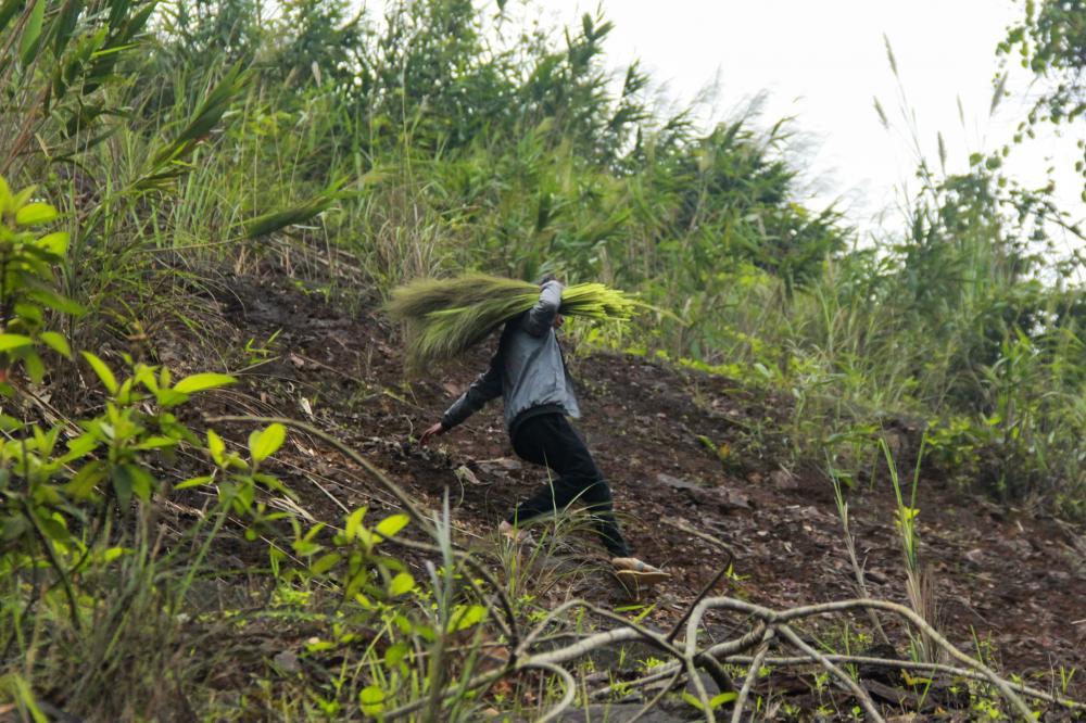 Lộc trời chỉ có trong khoảng đầu tháng Chạp đến ra Giêng là hết. Từ đầu mùa, hoa đót bắt đầu nở, bà con đã rục rịch đi vào rừng lấy lộc.  Khi lá cây rừng còn đọng sương sớm, người dân đã đi vào rừng sâu để tìm cây đót