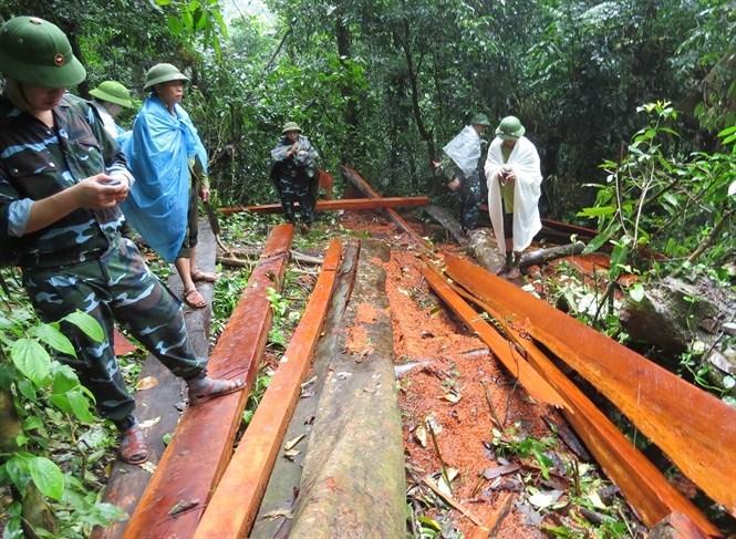 Gần 100m3 gỗ được phát hiện ở rừng phòng hộ huyện Tuyên Hóa, tỉnh Quảng Bình.