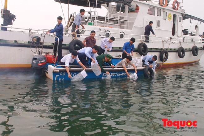Gần 80 vạn tâm sú giống được thả để tái tạo nguồn lợi thuỷ sản ở Quảng Bình.