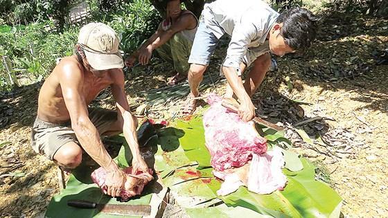 Lợn rừng dính bẫy được mổ xẻ để ngâm hóa chất cho tươi lâu