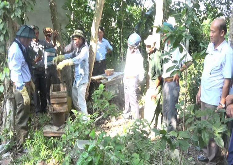 Lãnh đạo huyện Bố Trạch thu hoạch mật ong cùng người dân.