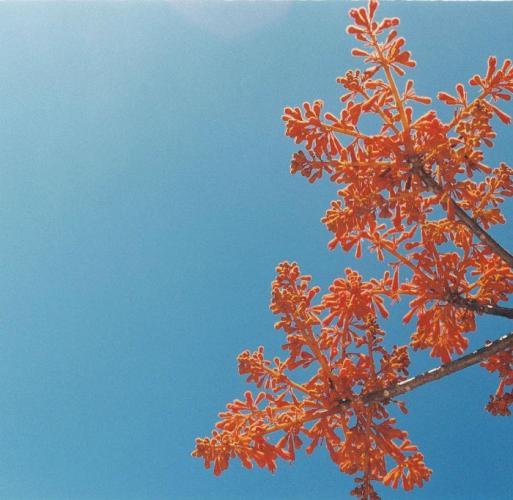 Hoa đồng trong nắng hè. (Ảnh: malilynovember)