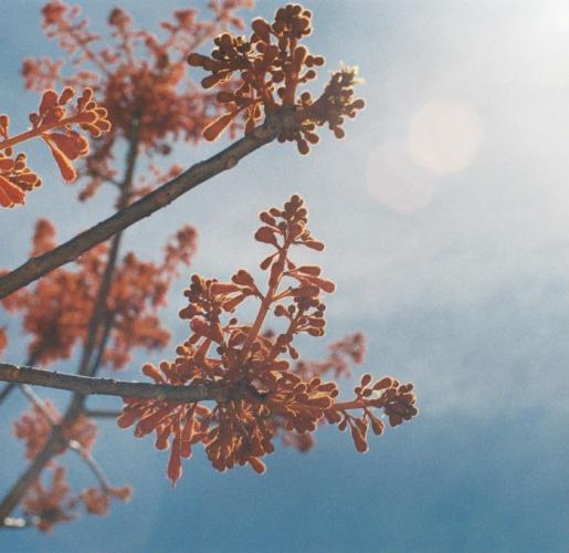 Là nắng, là hoa hay là lửa. (Ảnh: mailynovember)