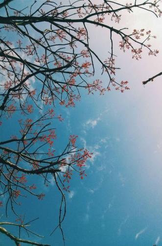 Sắc hoa trong sớm mai Cù Lao Chàm. (Ảnh: hai_kan)