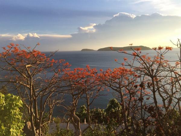 Biển xanh, mây trắng và hoa đỏ. (Ảnh: Check In Vietnam)