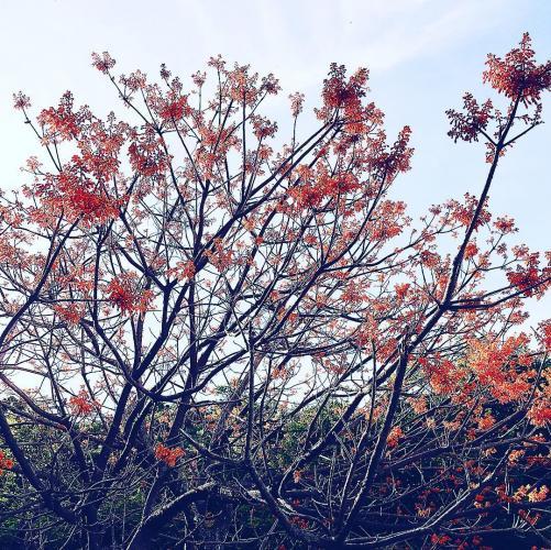 Sắc hoa tươi thắm, như một bức tranh tuyệt đẹp trên đảo. (Ảnh: @moon_chuchu)