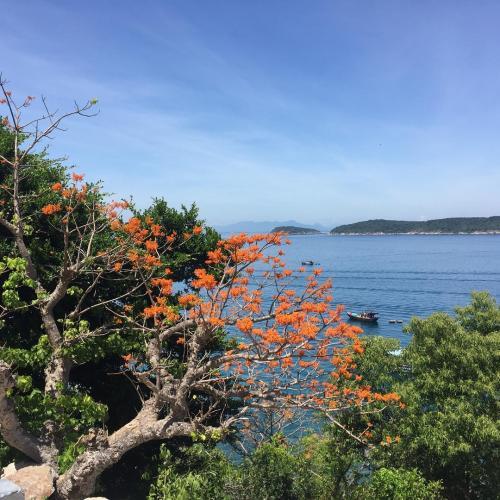 Màu cam rực rỡ giữa màu xanh của biển trời. (Ảnh: nguyen.giang5)