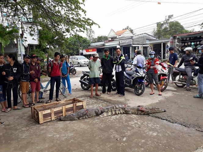 Người dân hiếu kỳ đứng xem cá sấu bày bán bên đường ở xã Điện Minh