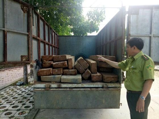 Xe chở gỗ được đưa về Chi cục Kiểm lâm tỉnh Quảng Ngãi