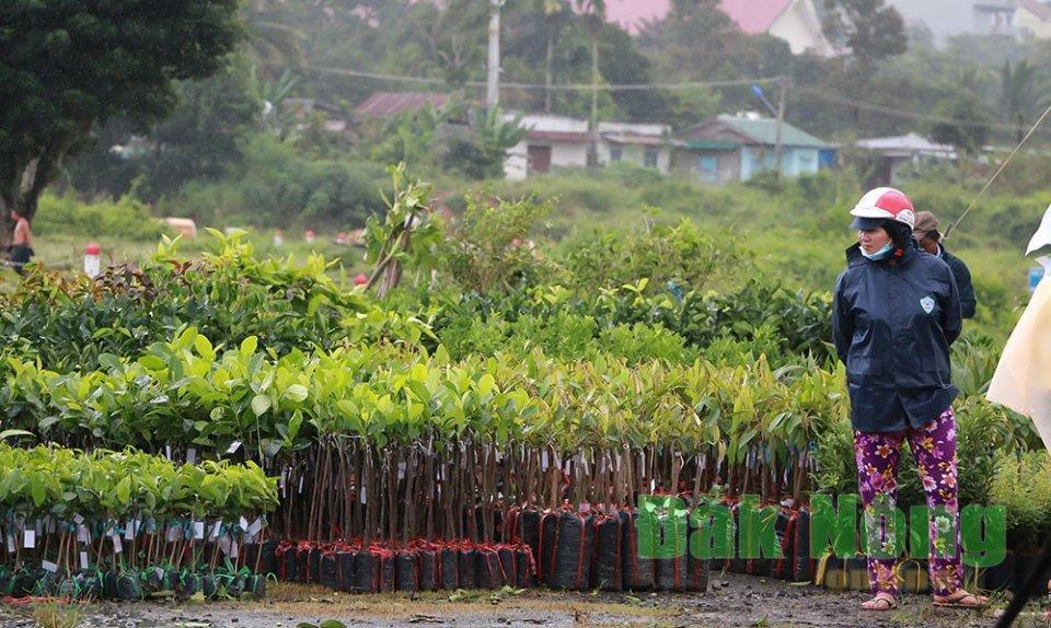 Một gian hàng giống cây trồng