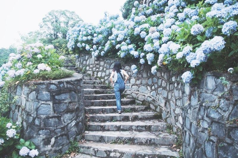 Cẩm tú cầu được người dân bản địa trồng rất nhiều bên sườn đồi và các lối đi, những bông hoa nhiều màu tạo nên cảnh sắc thiên nhiên vô cùng rực rỡ.