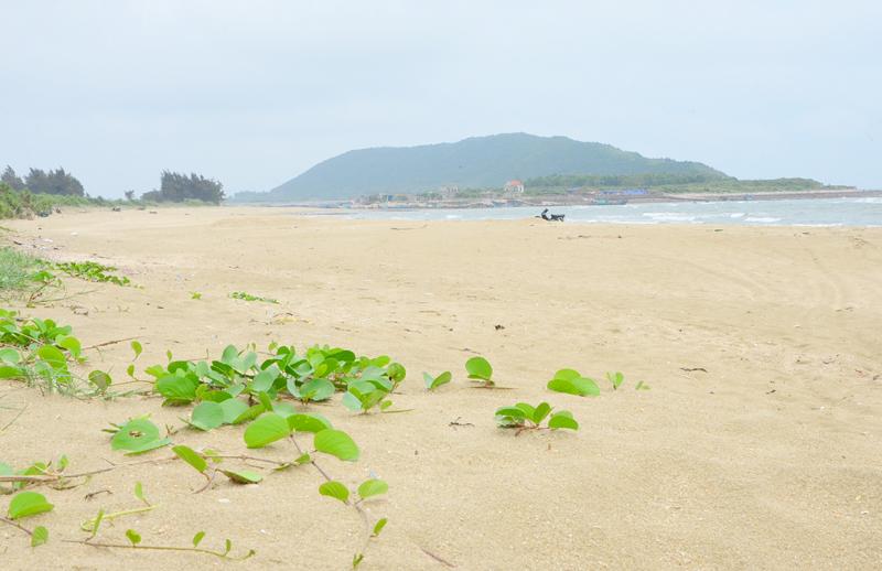 Bãi biển Bến Hèn hoang sơ, thơ mộng với cát trắng ngút tầm mắt và thảm thực vật đặc trưng ven biển.