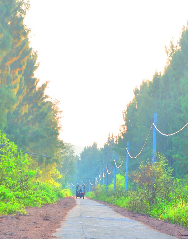Những con đường rợp bóng cây, thẳng tắp trên đảo.