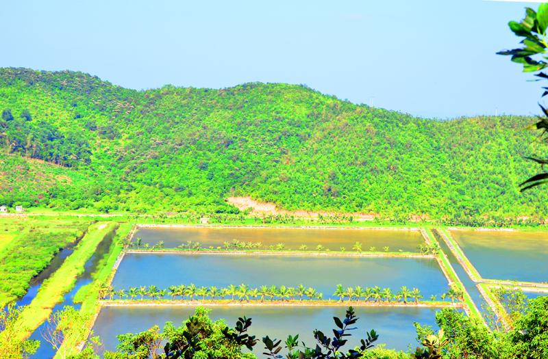 Màu xanh của núi, của hồ, đầm trên đảo Ngọc Vừng.