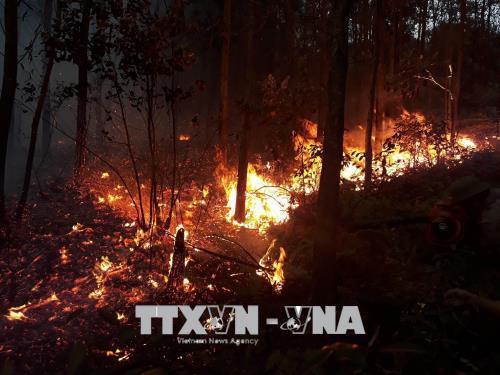 Quảng Ninh: Cháy lớn ở rừng thông tại Đại Yên. Ảnh: Trung Nguyên - TTXVN