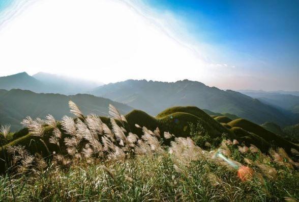 Mùa thu đông là thời khắc sắc trắng bạt ngàn của cánh đồng cỏ lau