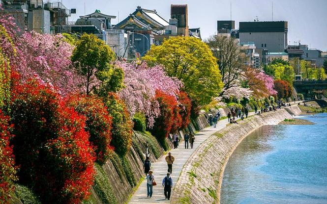 Kyoto, Nhật Bản. Ảnh: TOTORORO