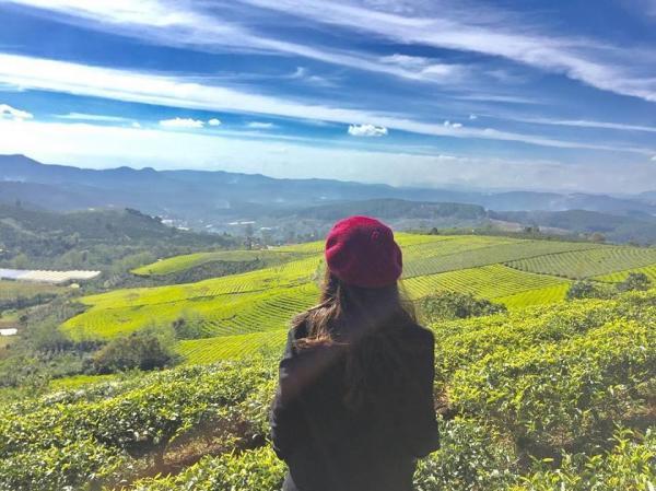 Những đồi chè xanh mát ở thung lũng Mai Châu Ảnh: Hà Phạm