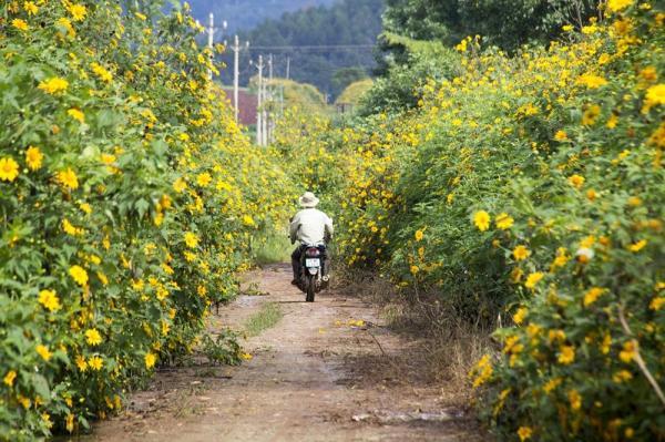 Đà Lạt mộng mơ quyến rũ với những mùa hoa. Ảnh: Văn Hào