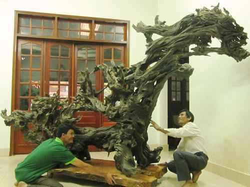 Gốc trâm đỏ của anh Nguyễn Phi Hùng