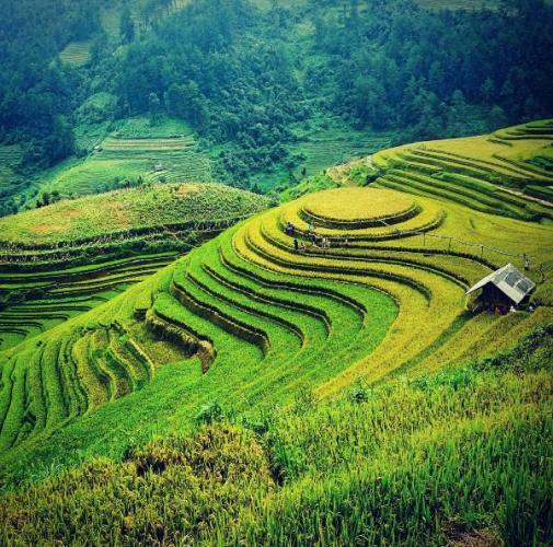 Tháng 9, lúa chưa chín hết nhưng bắt đầu chuyển từ xanh sang vàng rất quyến rũ, đẹp tựa bức tranh màu nước. Ảnh:iamdavidngo