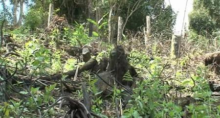 Những cánh rừng bị phá để trồng cây Dong riềng.