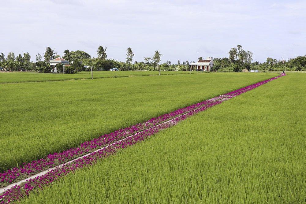 Năm 2016, ông Thảnh nảy ra ý tưởng trồng hoa mười giờ dọc con đường dẫn qua cánh đồng đến nhà của ông. Theo ông, việc này là để tránh cỏdại mọclàm sạt lở con đường bê tông ông đã đầu tư làm.