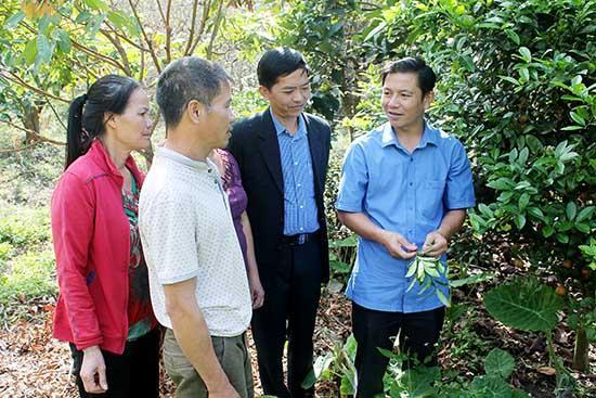 Cán bộ Hội Nông dân Mộc Châu hướng dẫn hội viên kỹ thuật chăm sóc cây ăn quả.