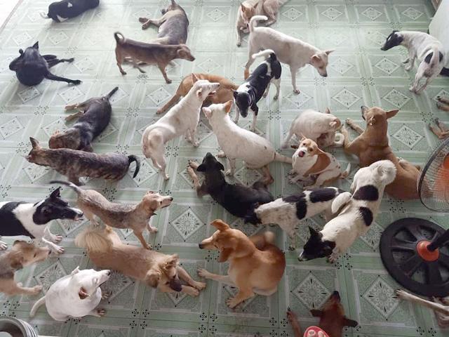 Qua bàn tay chăm sóc tận tình của chị Hà, những chú chó, mèo vốn không đẹp sẽ mỡ màng, trổ mã.