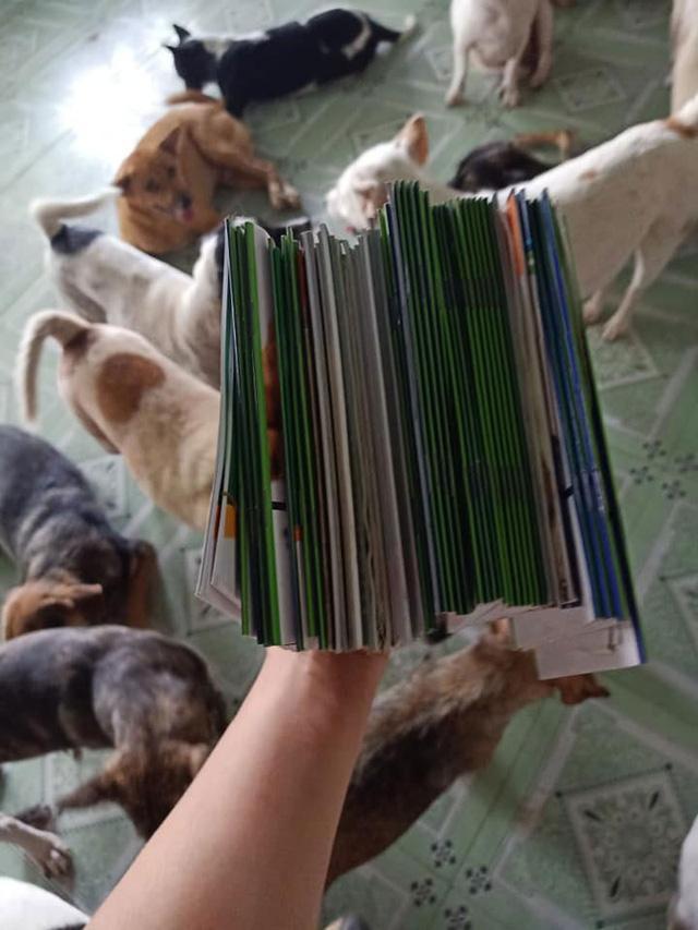 Tất cả các chú chó và mèo của chị Hà đều được tiêm vắc xin phòng dại đầy đủ.