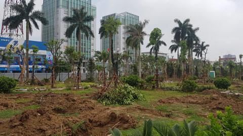 Cây xanh được trồng mới trong vườn hoa Trung tâm TP