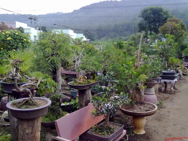 Cây cảnh tại làng vườn Bách Thuận. Ảnh: Internet