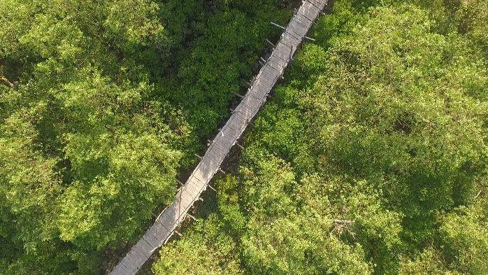 Bạn có thể đi dạo trên cây cầu tre dài nhất Việt Nam - cây cầu nối giữa các khu rừng...