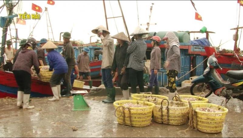 Du khách có thể ghé vào một ghe thuyền mua hải sản còn tươi nguyên như cua, tôm, bề bề, ngao, sứa..