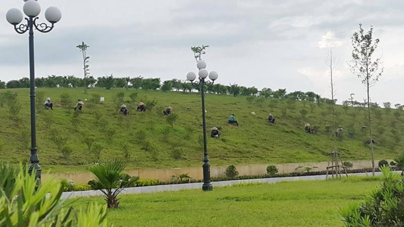 Đoàn người ngày ngày ươm cây trồng cỏ tạo núi giả.